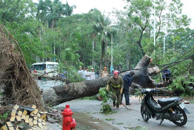 Siêu bãoSơn Tinh tàn phá Hải Phòng. Nguồn: giaoduc.net.vn