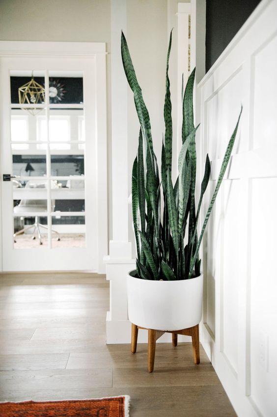 Bạn cũng có thể đặt chậu cây gần cạnh cửa sổ hoặc cửa đi lại khiến không gian tràn đầy sức sống. Nguồn:elledecoration.vn