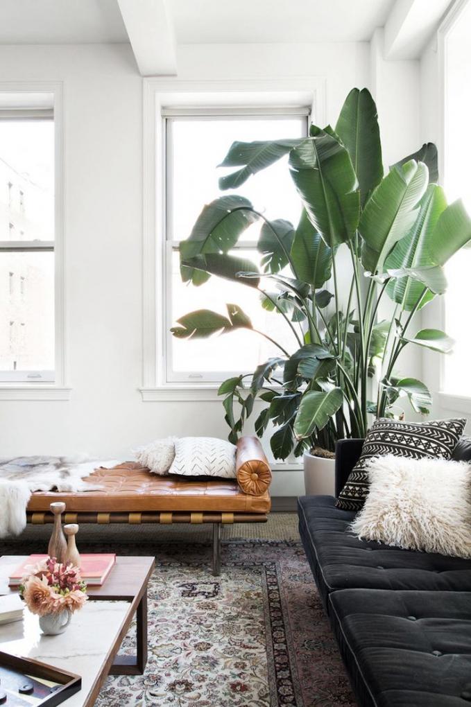 Đặt một chậu cây lớn vào góc phòng để tăng hiệu ứng không gian trải rộng cho phòng khách. Nguồn:elledecoration.vn