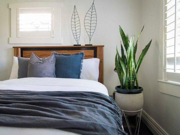Những loại cây nên đặt trong phòng ngủ như lan quân tử, văn trúc, lưỡi hổ, vạn niên thanh… Nguồn: vuoncayviet.com