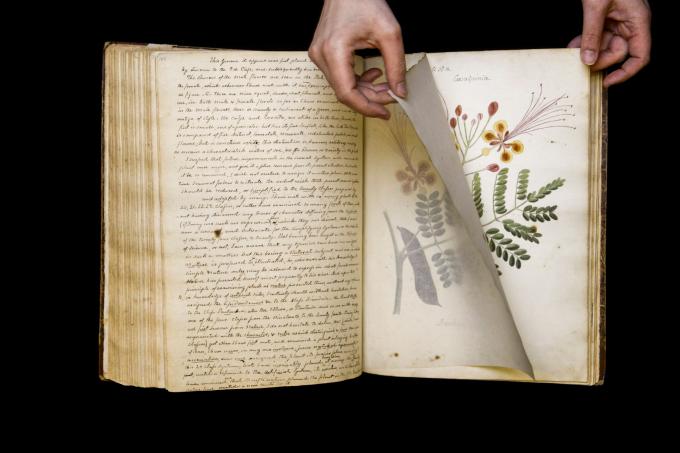 Bản thảo Specimens of the Plants and Fruits of the Island of Cuba (tạm dịch: Các loài thực vật và trái cây của hòn đảo Cuba) được Nancy Anne Kingsbury Wollstonecraft (một phụ nữ, một nhà thực vật học nghiệp dư người Mỹ) chuyển đến Cuba sống vào những năm 1820 viết và biên soạn. Nguồn:nationalgeographic.com
