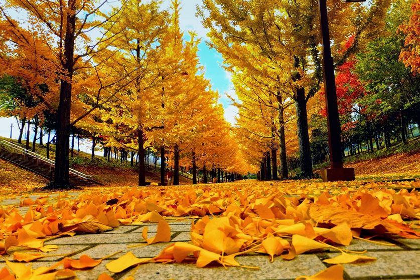 4 lí do nên đi du lịch vào mùa thu