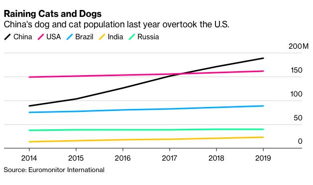 Số lượng chó mèo ở Trung Quốc tăng mạnh trong 5 năm qua. Ảnh: Bloomberg.