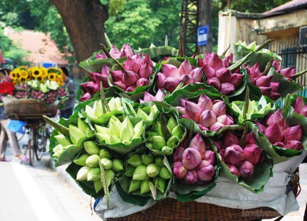 Cách nhận biết hóa sen và hoa quỳ để tránh mua nhầm.