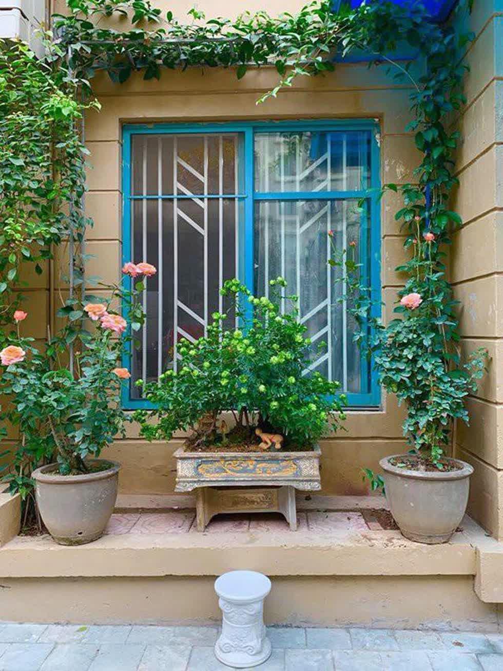 Những chậu cây đặt bên cửa sổ lúc nhỏ chưa thật sự ảnh hưởng tới khả năng đón sáng của căn phòng. Nhưng khi trưởng thành, cây xanh có thể cản trở một lượng lớn sáng tiến vào trong phòng.