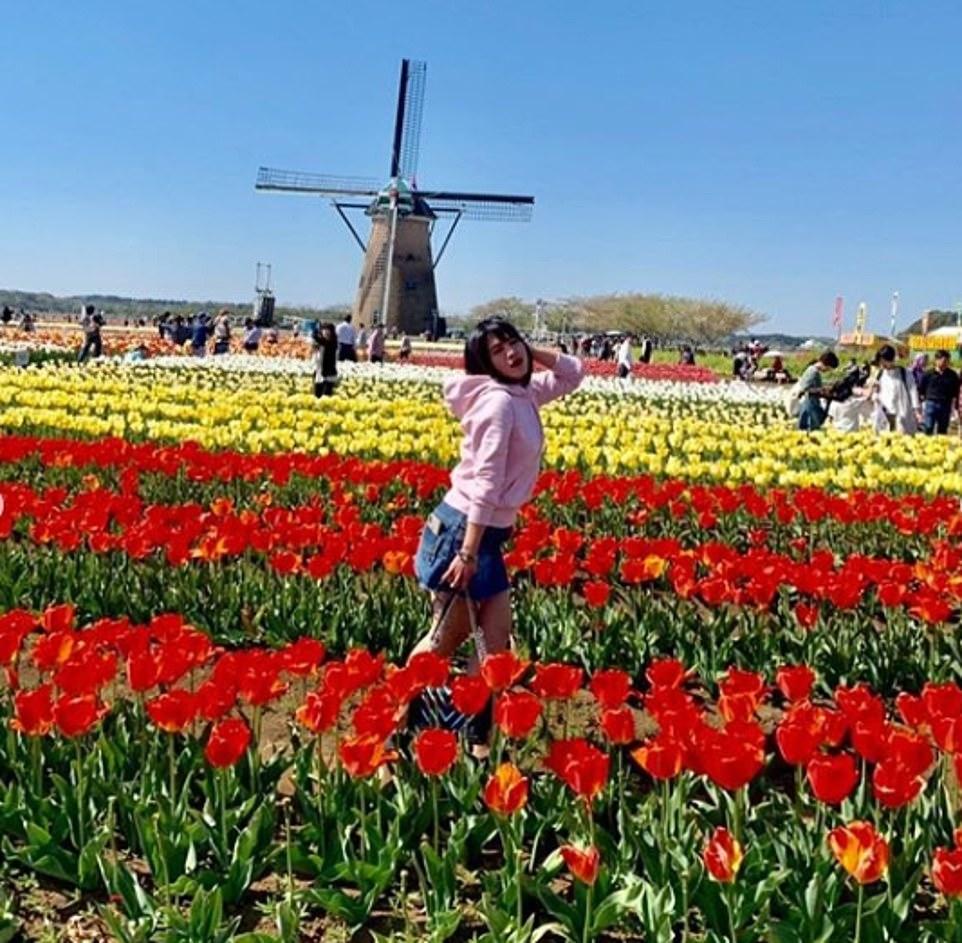 Trước đây,khách du lịch thường đổ về các cánh đồng để đi bộ giữa những bông hoa ấn tượng, nằm dưới bóng của cối xay gió.