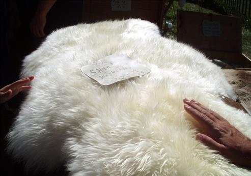 Cảm nhận chăn lông cừu bằng tay để phân biệt chăn lông cừu thật giả.
