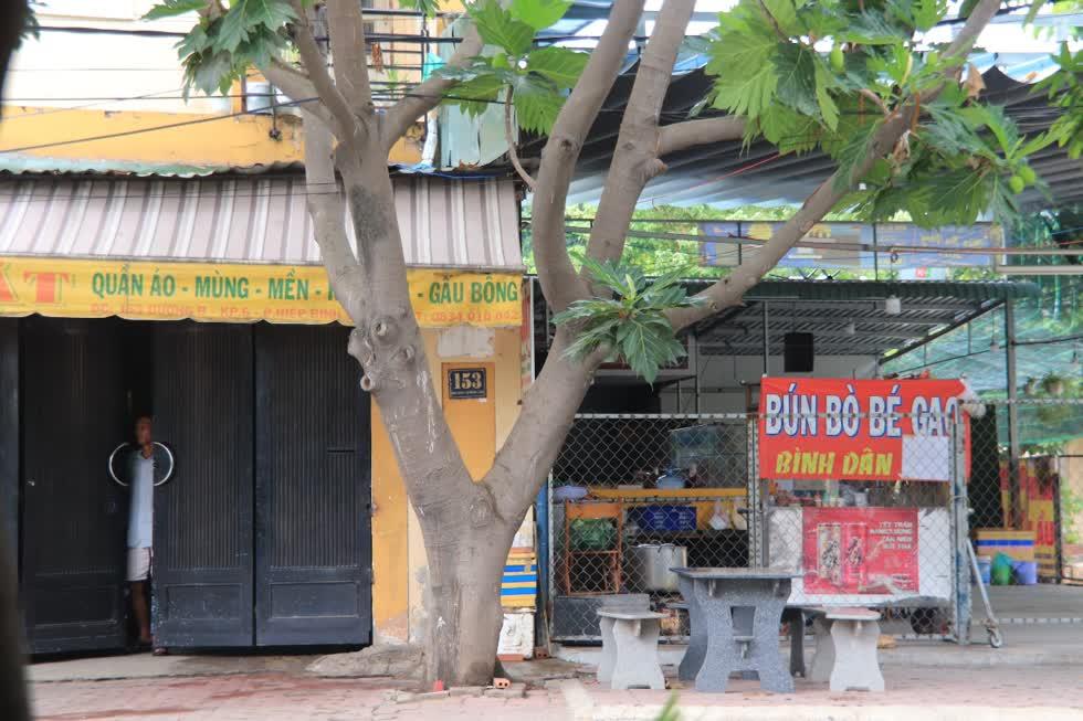 Cây sa kê trước vỉa hè nhà người dân là hình ảnh rất dễ dàng bắt gặp trên các đường phố ở Sài Gòn.Ảnh: Tri Thức