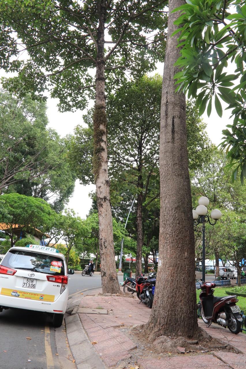Một góc cua trên đường Hoàng Sa, đoạn gần cầu Thị Nghè, córất nhiều cây xanh được trồng hai bên đường,quy hoạchcây xanhđượcthực hiện theo chỉ đạo của UBND TP.HCM.Ảnh: Tri Thức