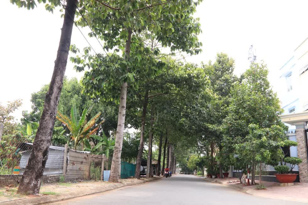 Hiện tại trên địa bànTP.HCM, nếu chỉ tính số lượng mà chính quyền thành phố giao cho Sở GTVT TP.HCM quản lý, hệ thống cây xanh đường phố hiện có khoảng 130.000 cây các loại. Ảnh: Tri Thức