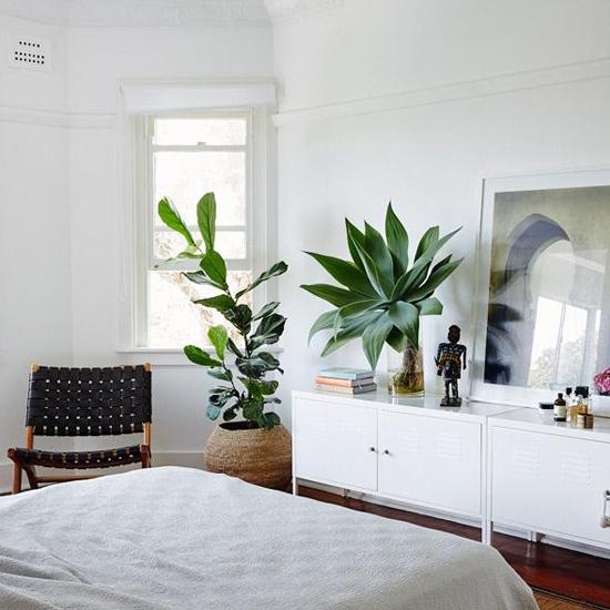 10 vị trí trong nhà nên bố trí cây cảnh để có thêm tài lộc