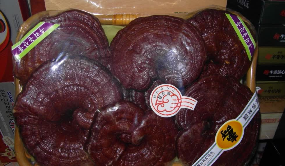 Nên mua nấm linh chi đỏ ở nơi uy tín, chất lượng.