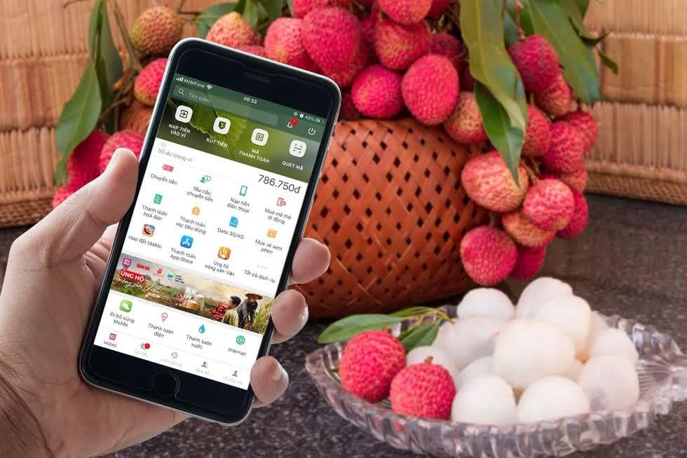 """Chiều 10/6/2020, Liên hiệp Hợp tác xã Thương mại TP.HCM (Saigon Co.op) công bố, chỉ sau 8 giờ ra mắt trên ví điện tử MoMo, chương trình """"Ủng hộ nông sản Việt"""" đã có hàng trăm giao dịch đặt mua thành công hơn 8 tấn trái vải. Ảnh: TTXVN."""