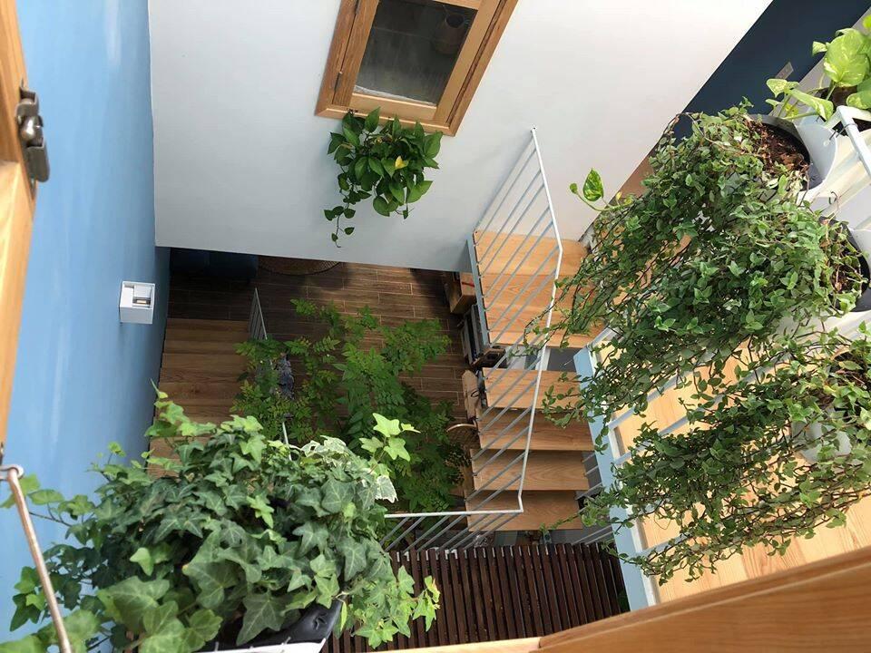 Hệ thống giếng trời của ngôi nhà được kết hợp với cầu thang.