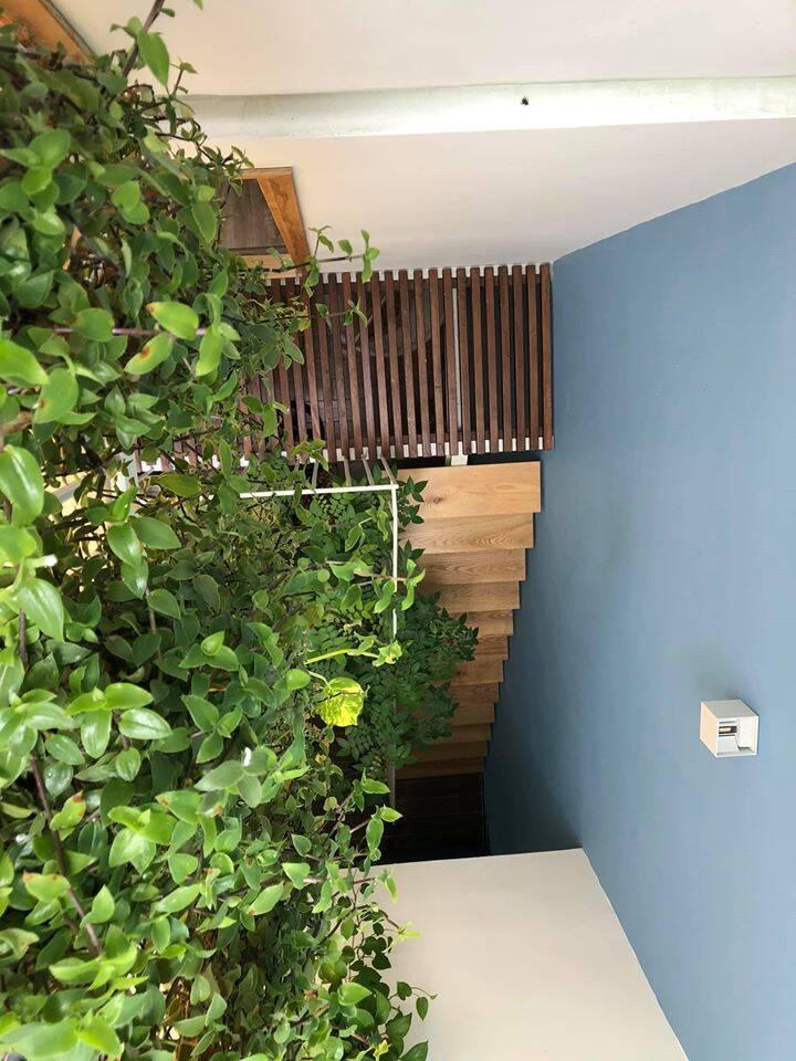 Khu vực giếng trời được trang trí ngập tràn chậu cây xanh mướt như cây trầu bà, cây thường xuân,...