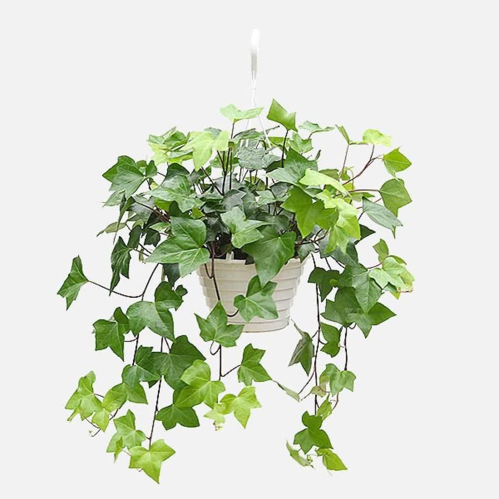 7 loại cây nên trồng trong phòng tắm, vừa đẹp lại hút ẩm tối đa