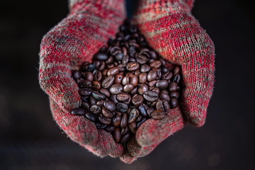 Hạt cà phê được chế biến tại xưởng Antong. Ảnh: AFP.