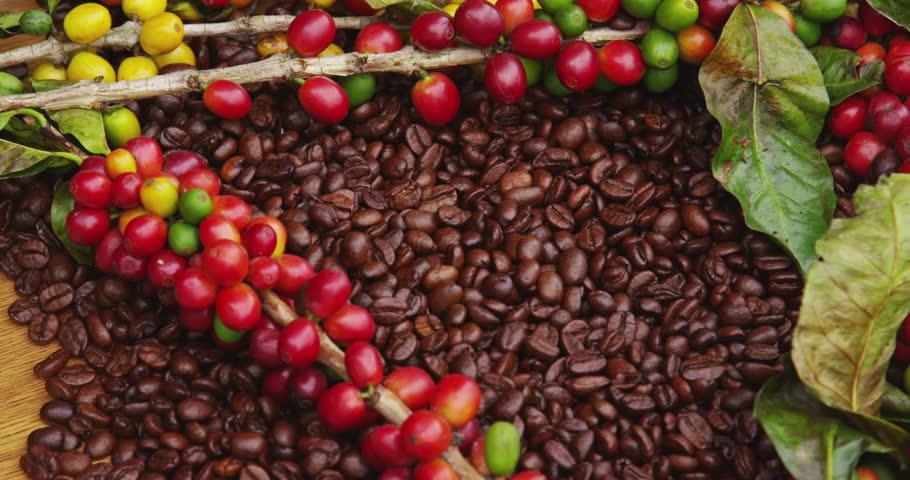 Giá cà phê thế giới tăng nhờ nhu cầu hồi phục
