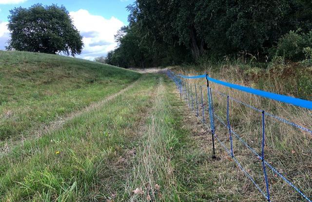 Một hàng rào động vật hoang dã màu xanh dọc theo biên giới giữa miền đông nước Đức và miền tây Ba Lan được vẽ sau khi một trường hợp bệnh dịch tả lợn châu Phi (ASF) ở một con lợn rừng được xác nhận ở Guben, Đức, ngày 10/9/2020. Ảnh: Reuters.