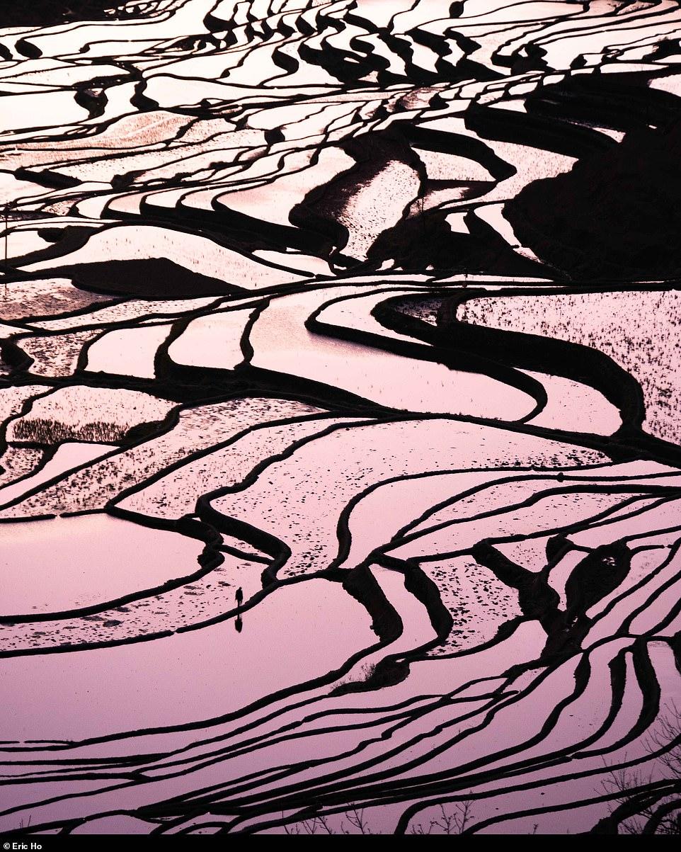 Bức ảnh thanh bình này chụp ruộng bậc thang Yuanyang, ở dãy núi Ailao phía nam Trung Quốc, lọt vào chung kết ở hạng mục phong cảnh. Ảnh được chụp bởi Eric Ho.