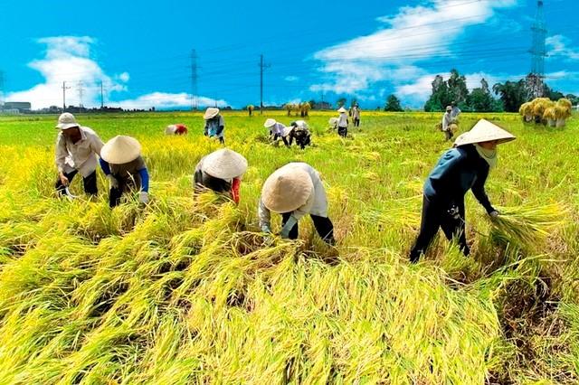 Thị trường tuần qua: Vàng, xăng dầu đồng loạt giảm, gạo Việt Nam giá cao nhất thế giới