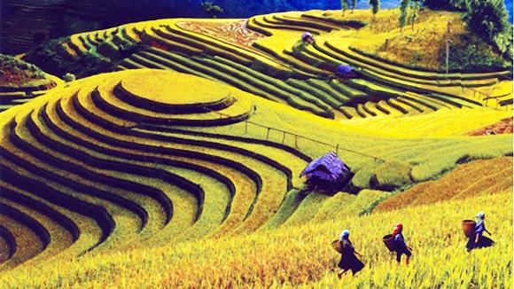 Từ trên cao, bao quát cả triền đồi, bạn vẫn thấy nơi đây đan xen những màu xanh, vàng óng ả. Bức tranh thiên nhiên Mù Cang Chải tuyệt đẹp được