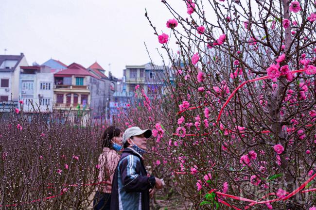 Nhiều thương lái tìm đến mua hoa