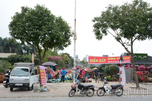 Điểm giải cứu nông sản tại đường Cổ linh, Long Biên.