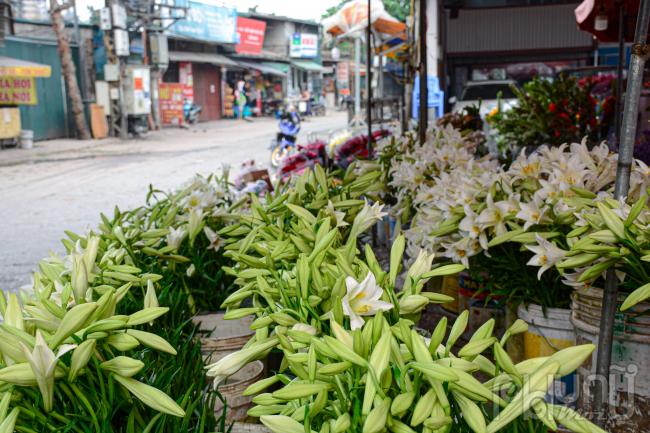 Một cửa hàng bán hoa tại chợ hoa Quảng An bày bán chủ yếu là loa kèn.
