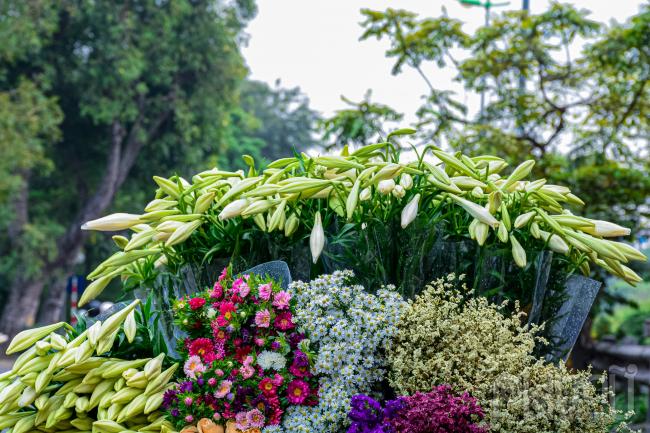 Đi kèm với hoa loa kèn không thể thiếu các loài hoa khác.