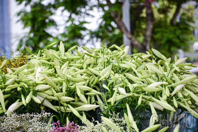 Hoa loa kèn đầu mùa từ vườn ra phố