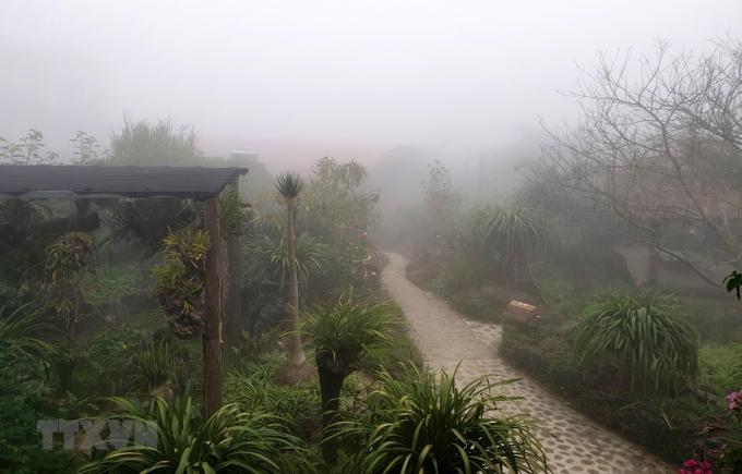 Sương mù dày đặc ảnh hưởng hoa màu và cây trồng tại thị trấn Sa Pa. (Ảnh: Quốc Khánh/TTXVN)