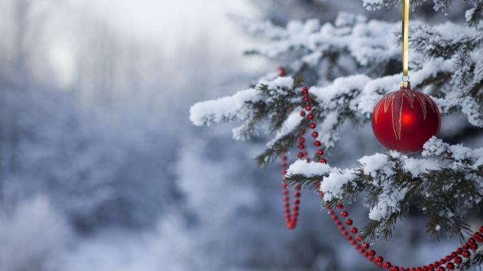Em mơ gì đêm Giáng Sinh?