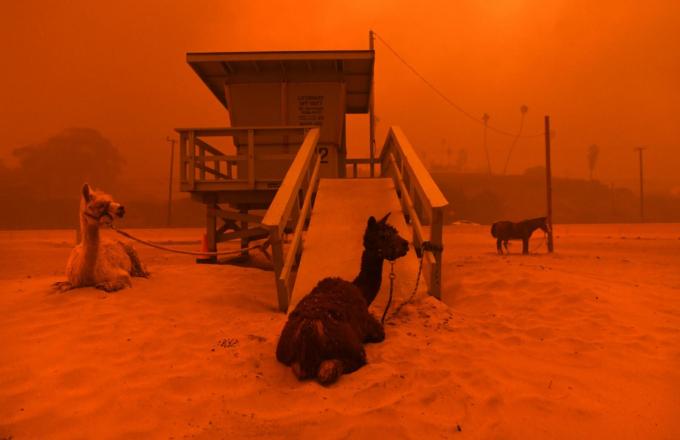Lính cứu hỏagỡ một lá cờ Mỹkhi một đám cháy rừng đóng cửa tại một ngôi nhà ở Oroville, California, vào tháng 7 năm 2017. Những trận cháy rừng dữ dội đã buộc hàng ngàn người phải sơ tán khỏi nhà ở phía tây nước Mỹ.Các nhà khoa học chỉ ra một sốnguyên nhândẫn đến các vụ cháy rừng kinh hoàng trong những năm gần đây, tất cả đều liên quan đến biến đổi khí hậu. Hình ảnh: Josh Edelson / AFP / Getty
