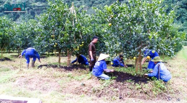 Trang trại của anh Vy đã tạo việc làm cho gần 50 lao động tại địa phương với mức thu nhập trung bình 7 - 9 triệu/tháng