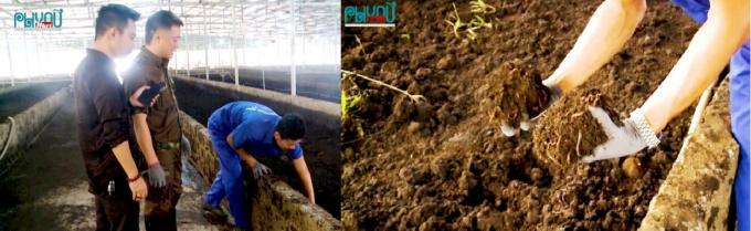 Anh Vy đã đầu tư một xưởng phân trùn quế hữu cơ với quy mô 6000 m2