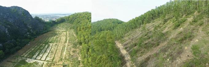 Hình ảnh rừng đặc dụng Hàm Rồng bị tàn phá do phóng viên chụp lại mới đây