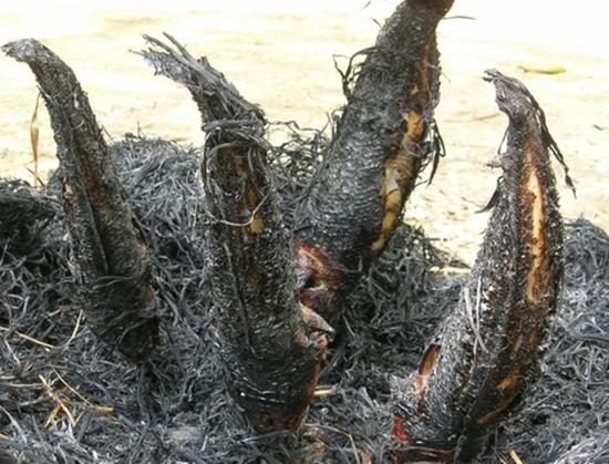 Khi rơm cháy hết, chưa lấy cá ra liền mà phải ủ trong than rơm một lúc.