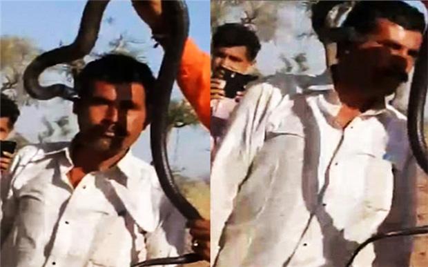 Một du khách ở Jodhpur, tây bắc Ấn Độ, đã bị một con rắn hổ mang cắn trong khi đang chụp hình với nó.