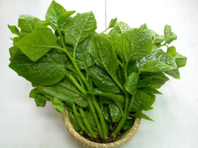 Bổ sung các loại rau có màu xanh đậm như rau ngót, bina, mồng tơi... giúp tăng cường khả năng bảo vệ tự nhiên của làn da.