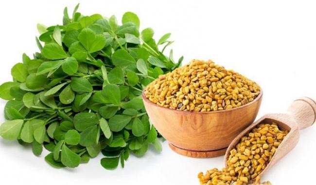 Cỏ cà rigiàu dinh dưỡng, đem lại nhiềulợi ích cho sức khỏe.