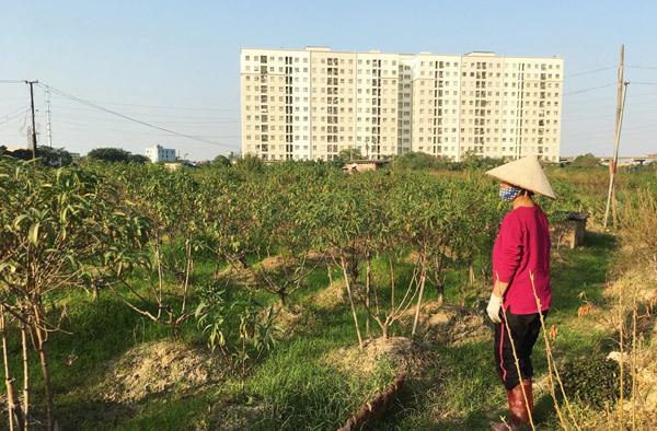 Đây là năm đầu tiên người dân phường Đông Ngạc phải hứng chịu thiệt hại này.