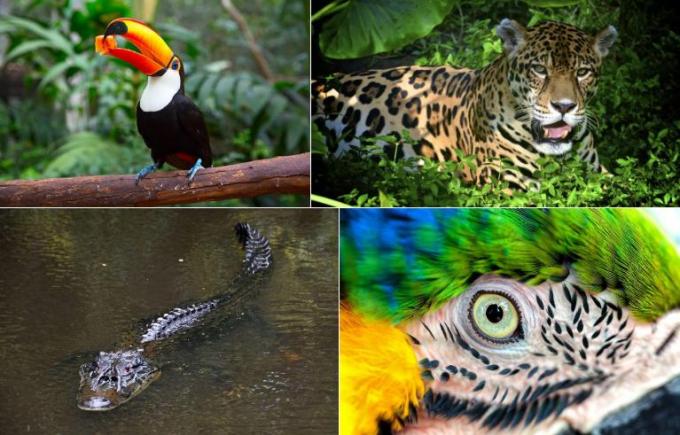 Rừng mưa Amazon chiếm hơn 50% rừng mưa của Trái Đất. Đây cũng là nơi sinh sống của nhiều loài động, thực vật quý hiếm. Các nhà khoa học đã tìm thấy 10% số loài động vật được phát hiện trên thế giới tại nơi này.