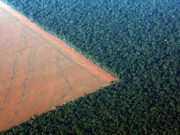Một phần rừng Amazon thuộc bang Mato Gross (Brazil) bị phá để làm đất trồng đậu nành.Diện tích rừng bị mất tại Brazil trong thời gian qua chủ yếu do hoạt động kinh tế bất hợp pháp tại vùng Amazon, bao gồm khai thác mỏ, chặt cây và chiếm đất.