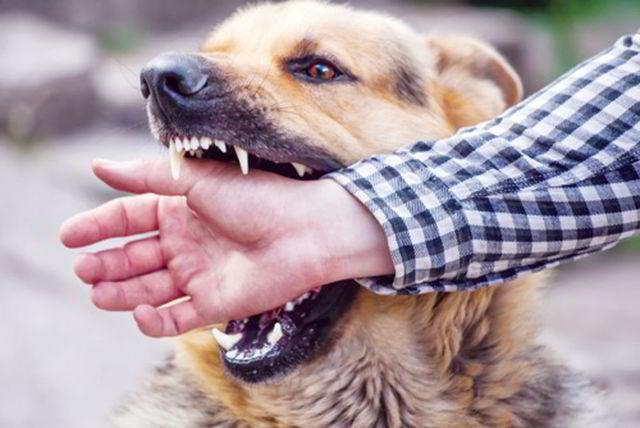 Những gia đình có con nhỏ nên hạn chế nuôi chó, nếu nuôi phải tiêm phòng.