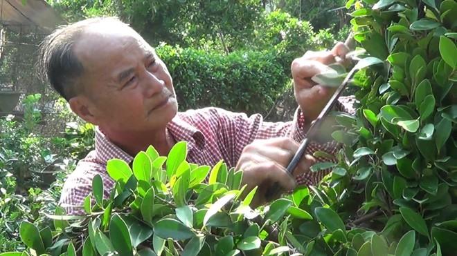 """Nghệ nhân Năm Công, tên thật là Nguyễn Văn Công, sinh năm 1947, ở huyện Chợ Lách, tỉnh Bến Tre. Ông được phong là """"vua kiểng thú"""" khi đã cho ra đời những loại kiểng mang hình dáng và nét độc đáo khó nơi nào có được."""
