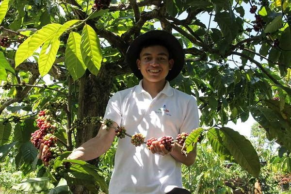 K'Brooke tự hào giới thiệu về những cây cà phê được trồng dưới tán cây rừng.