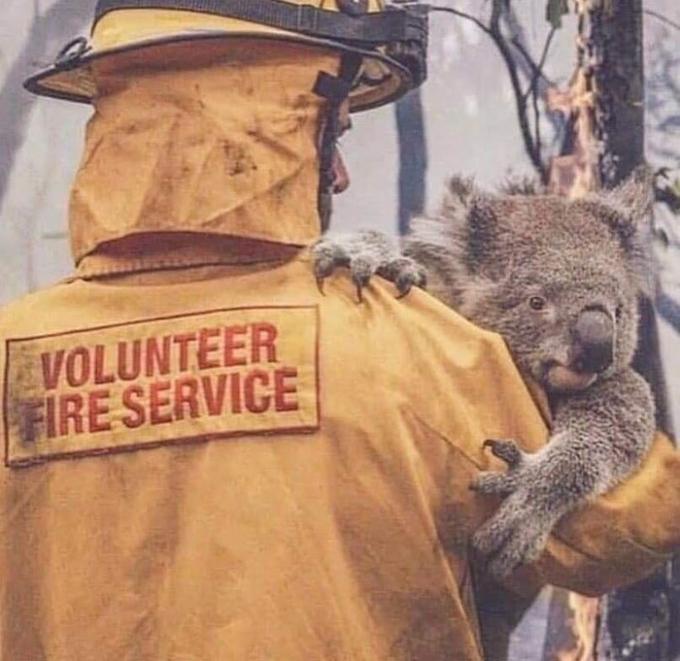 Lực lượng cứu hỏa tình nguyện đang giúp một chú gấu túi sau khi lửa rừng càn quét qua nơi sinh sống của nó.