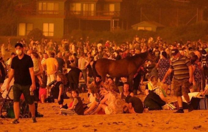 Một bãi biển đã trở thành nơi trú ẩn tạm thời để tránh lửa cho cả người và động vật.