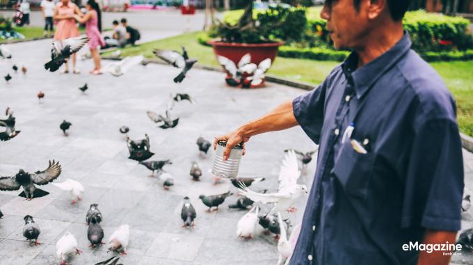 Ngày ngày anh Cường cũng cho chim bồ câu ăn và chăm sóc chúng ở đây, hơn 12 năm rồi.